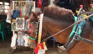 cidomo-gili-island-horse-cart