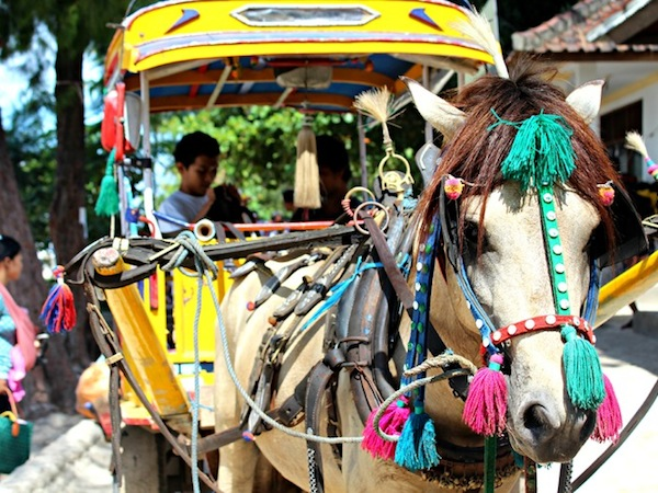 gili islands horse cart