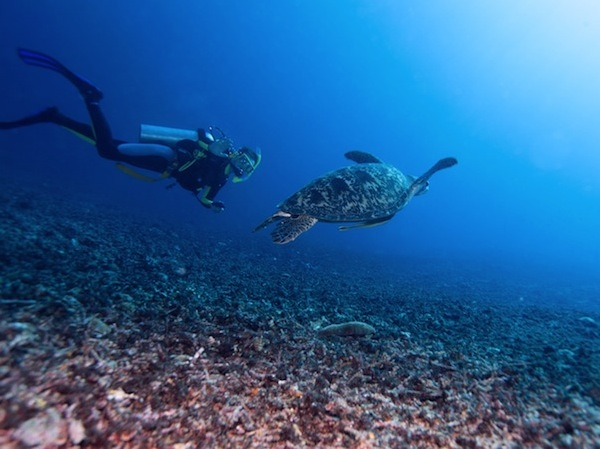 gili islands turtles